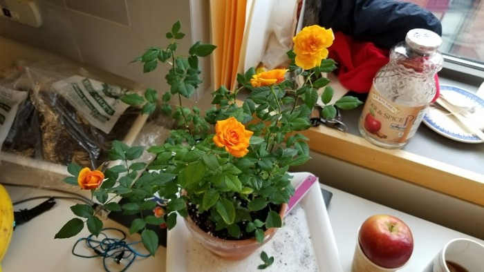 roses_nov
